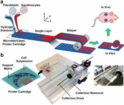 生物3D打印人工皮肤有哪些应用?