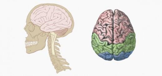 humanbrain3