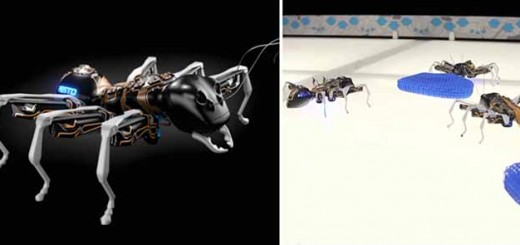 ants2