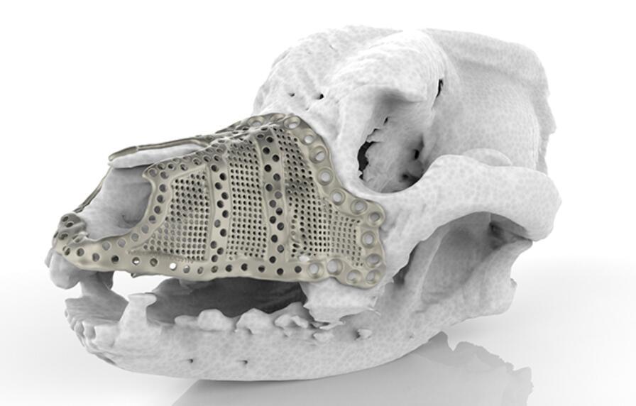 拯救宠物犬 — 增材制造技术在兽医外科手术中的应用