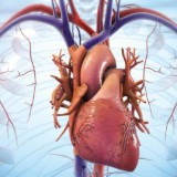BIOLIFE4D heart regenerate